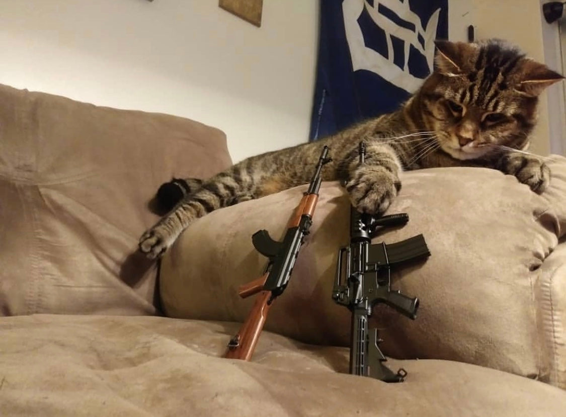 cat pawing between two small gun models