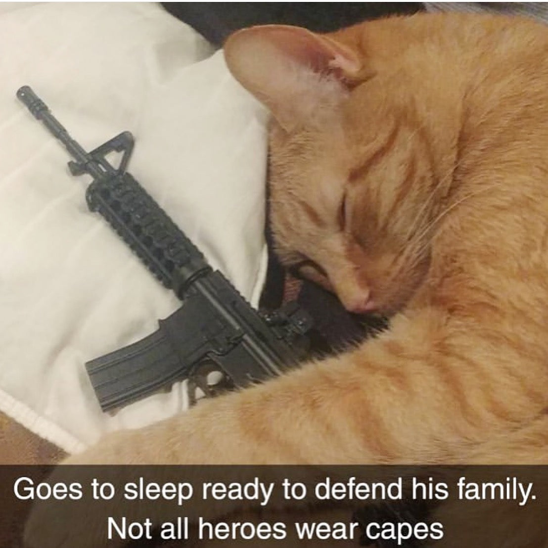 cat laying with goatgun