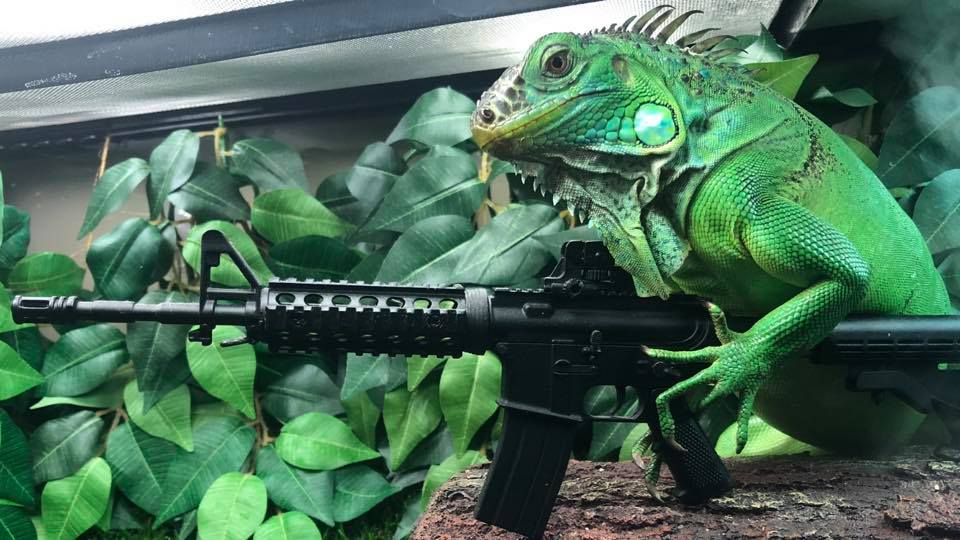 Iguana with miniature ar15 black model