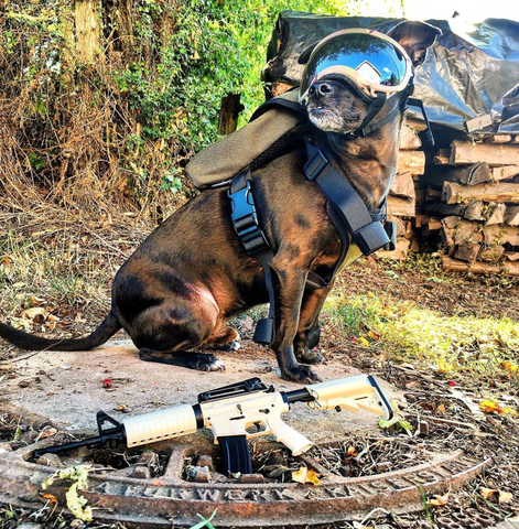 Dog with goggles and FDE mini AR15 on ground