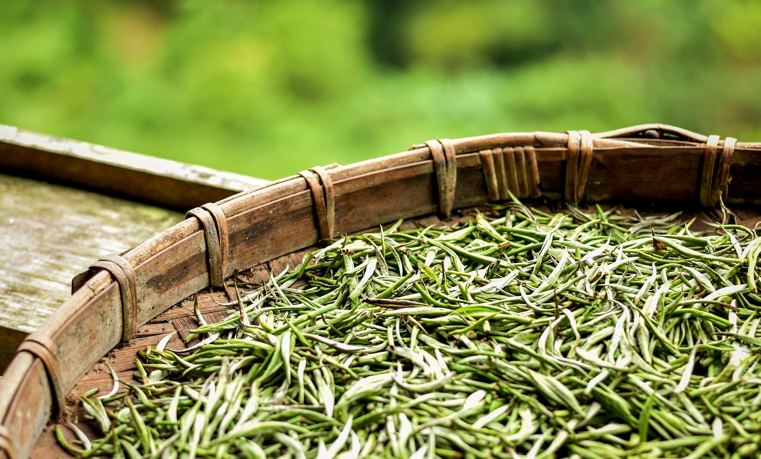 Uptown Tea Shop - Premium Loose Leaf Teas and Accessories: Air Drying of Silver Needle White Tea