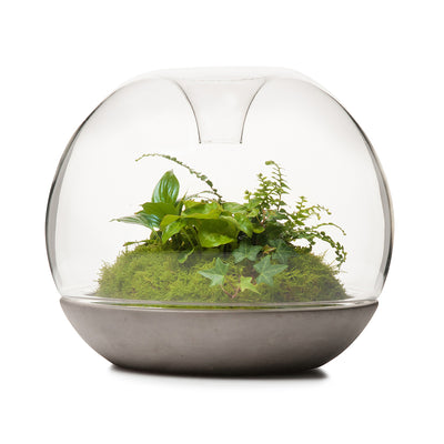Biodome Rainforest Terrarium - Concrete