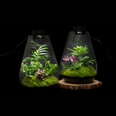 Bioscape Rainforest Terrarium