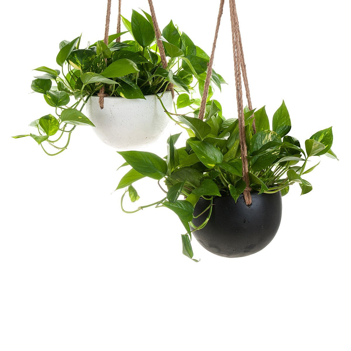 Image of: Handmade Terrariums And Indoor Plants Lulu Angel Melbourne