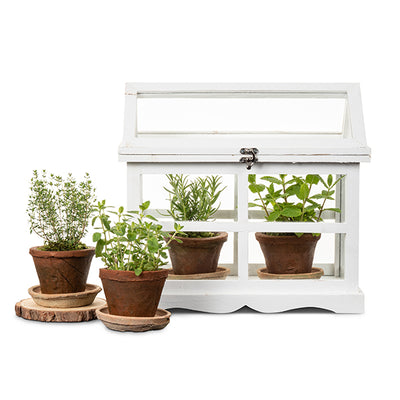 Mini Herb Greenhouse