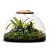 Rainforest Conservatory Terrarium