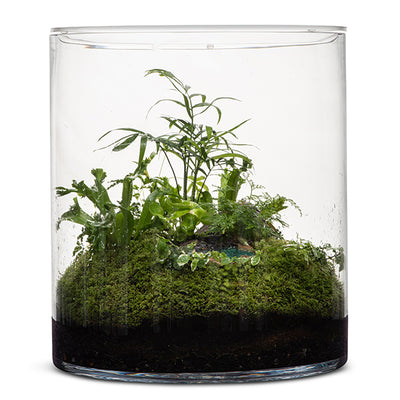 Rainforest Eden Terrarium