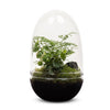 Rainforest Egg Terrarium