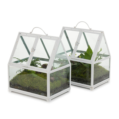 Rainforest Glasshouse Terrarium
