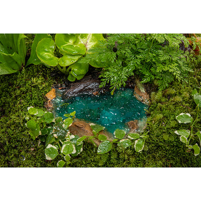 Rainforest Oasis Ponds