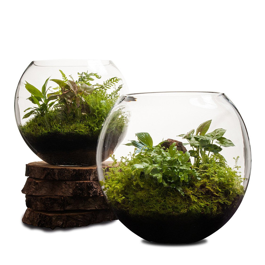 Revival Fishbowl Terrarium Lulu Angel