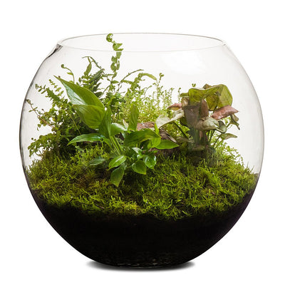 Revival Fishbowl Terrarium