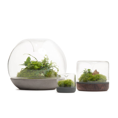 Biodome Rainforest Terrarium - Nero