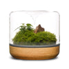 Sanctuary M Rainforest Terrarium - Oak