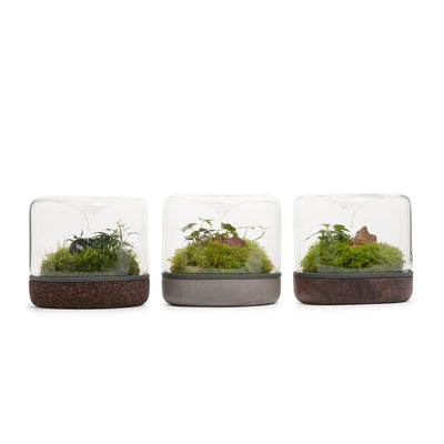 Sanctuary M Rainforest Terrarium - Smoked Oak