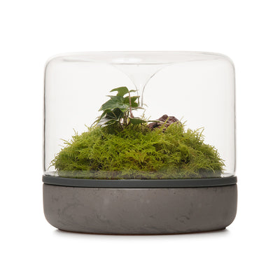 Sanctuary M Rainforest Terrarium - Concrete