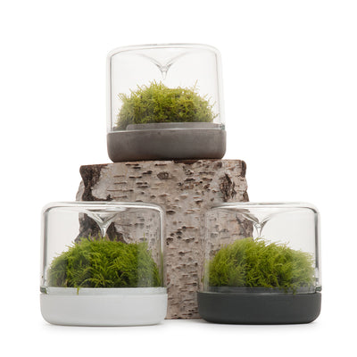 Sanctuary S Rainforest Terrarium - Concrete