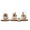 Seascape Egg Terrarium