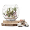 Seascape Fishbowl Terrarium