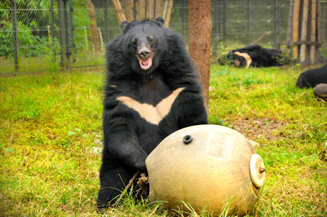 Kevin - Our Sonsored Moon Bear