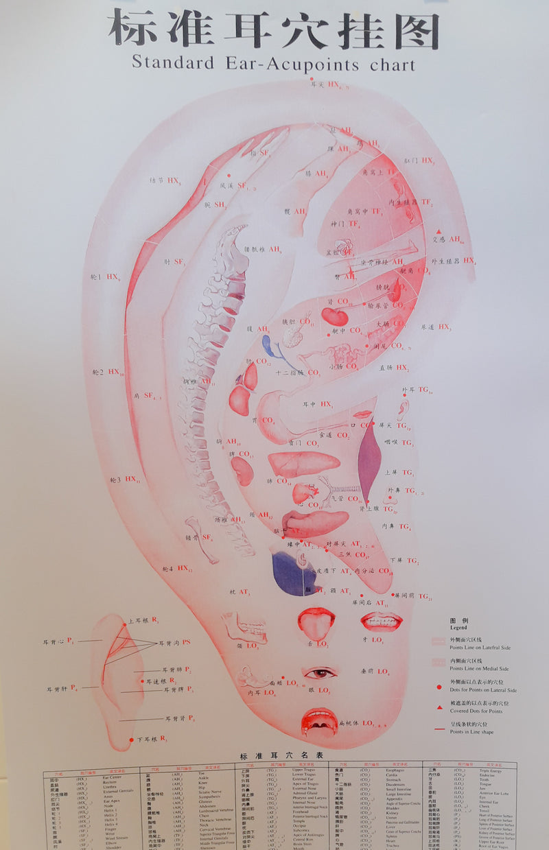 Acupuncture Chart - Auricular Points