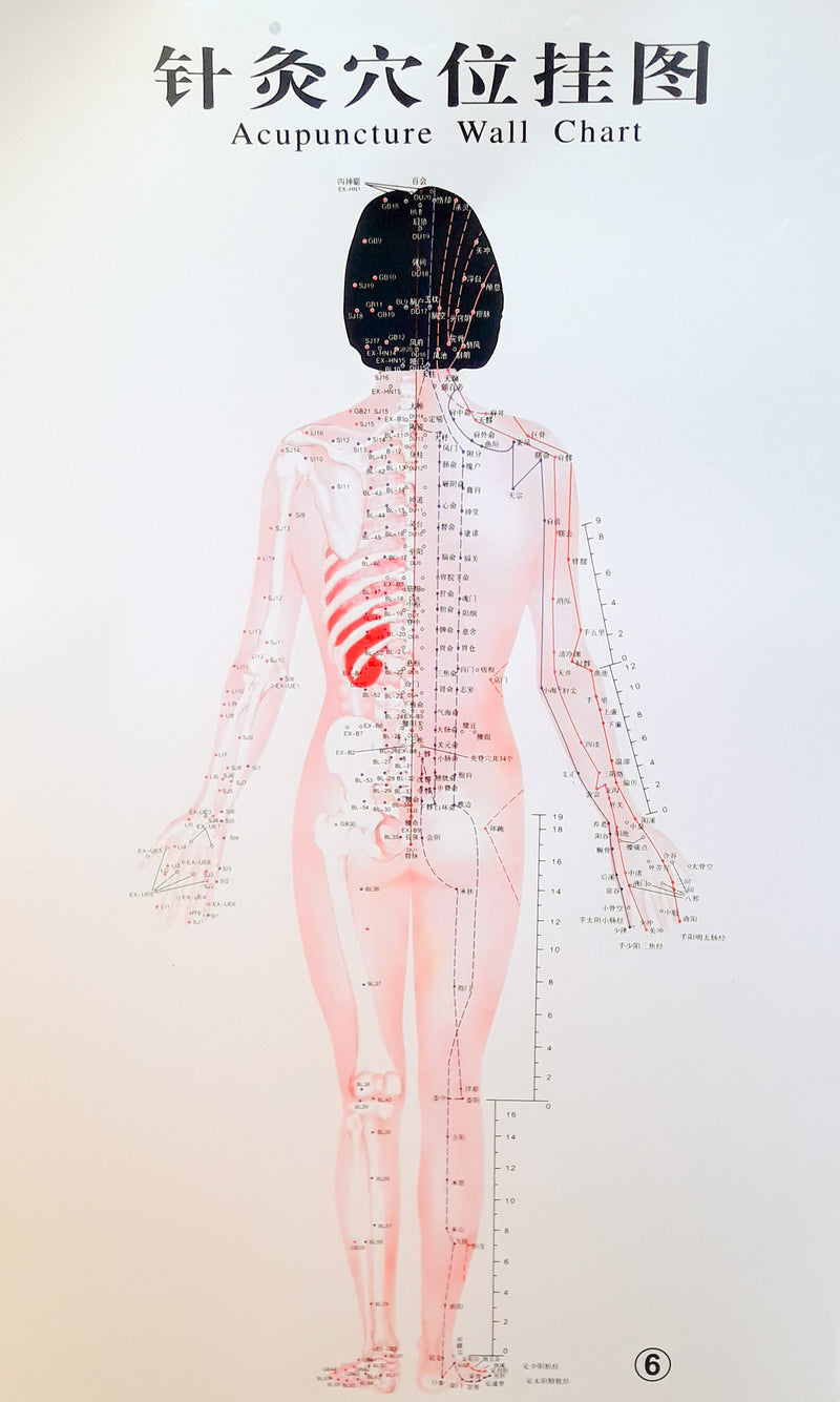 Acupuncture Chart - Female Back
