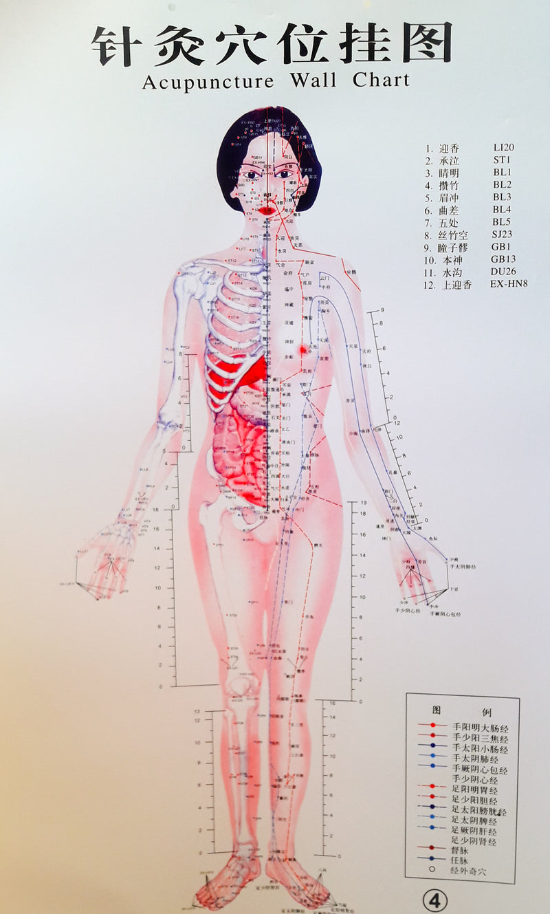 Acupuncture Chart - Female Front
