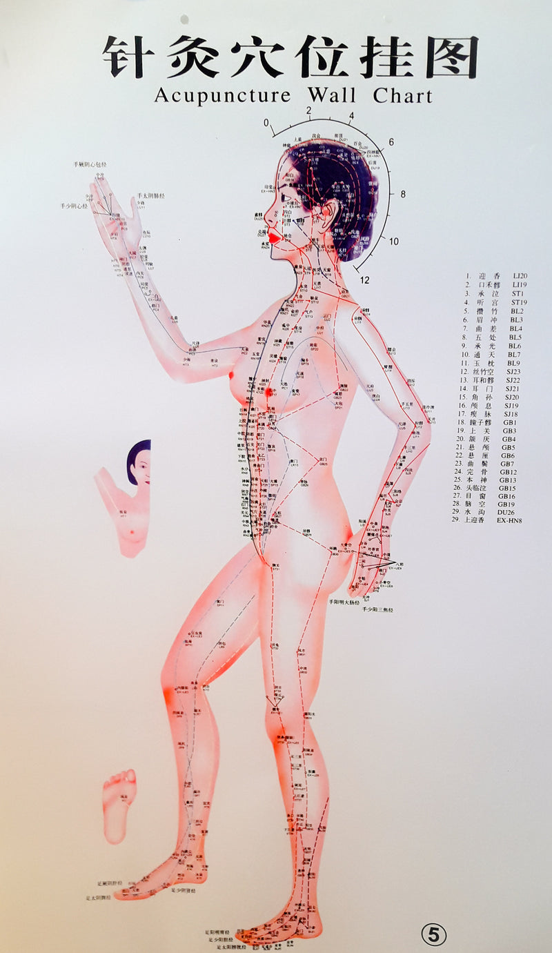 Acupuncture Chart - Female Side