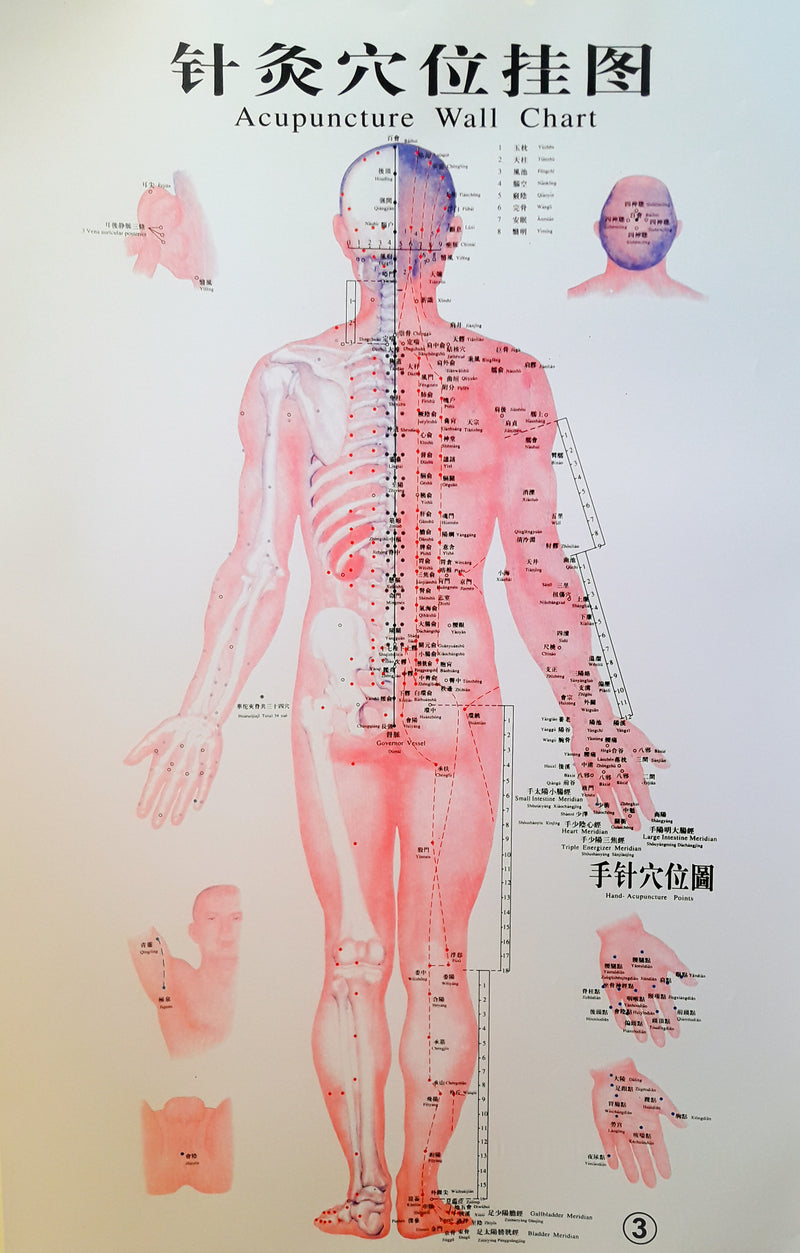Acupuncture Chart - Male Back