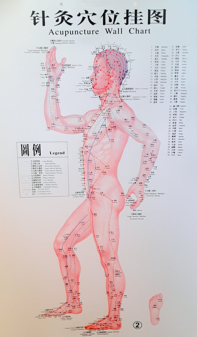 Acupuncture Chart - Male Side