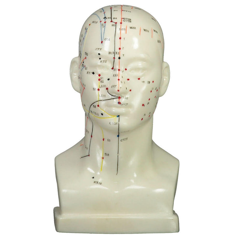 Head Model (20 cm) front  | TCM Supplies NZ