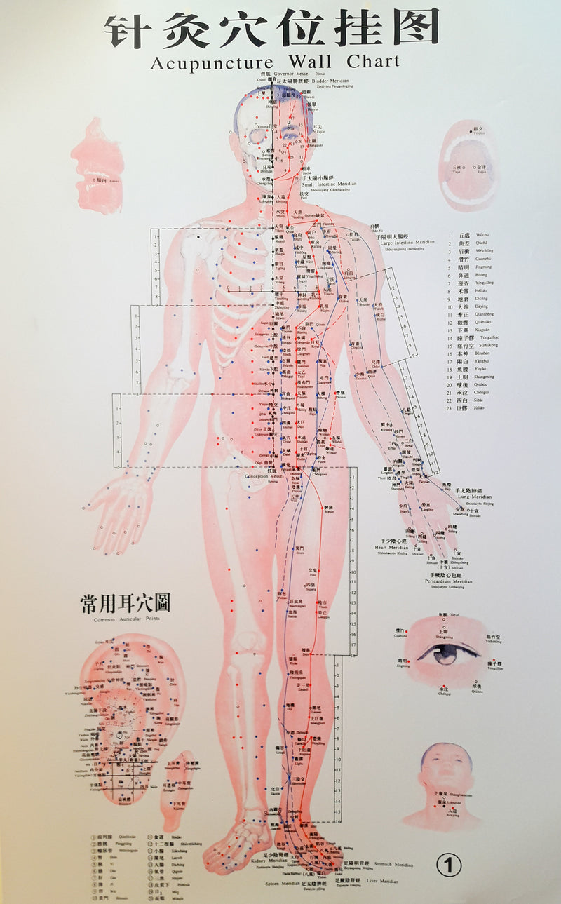 Acupuncture Chart - Male Front, Eye, Ear, Scalp