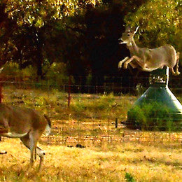Deer action at capsule feeder