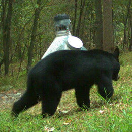 Black bear stalking capsule feeder