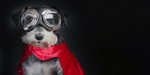 Dog with cape and goggles