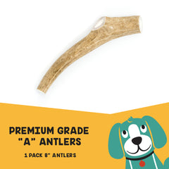 "Premium Grade ""A"" Antlers for Dogs - Large 8"