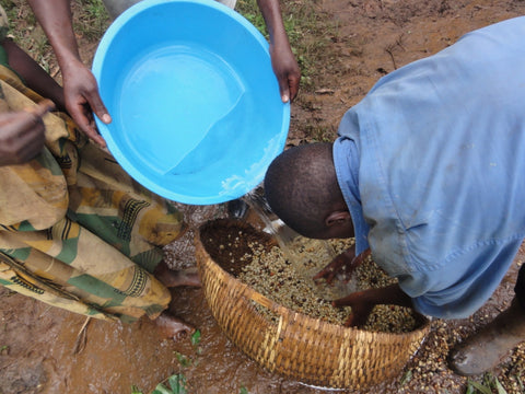 washing coffee beans in Uganda