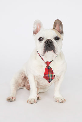 Plaid Holiday Dog Necktie