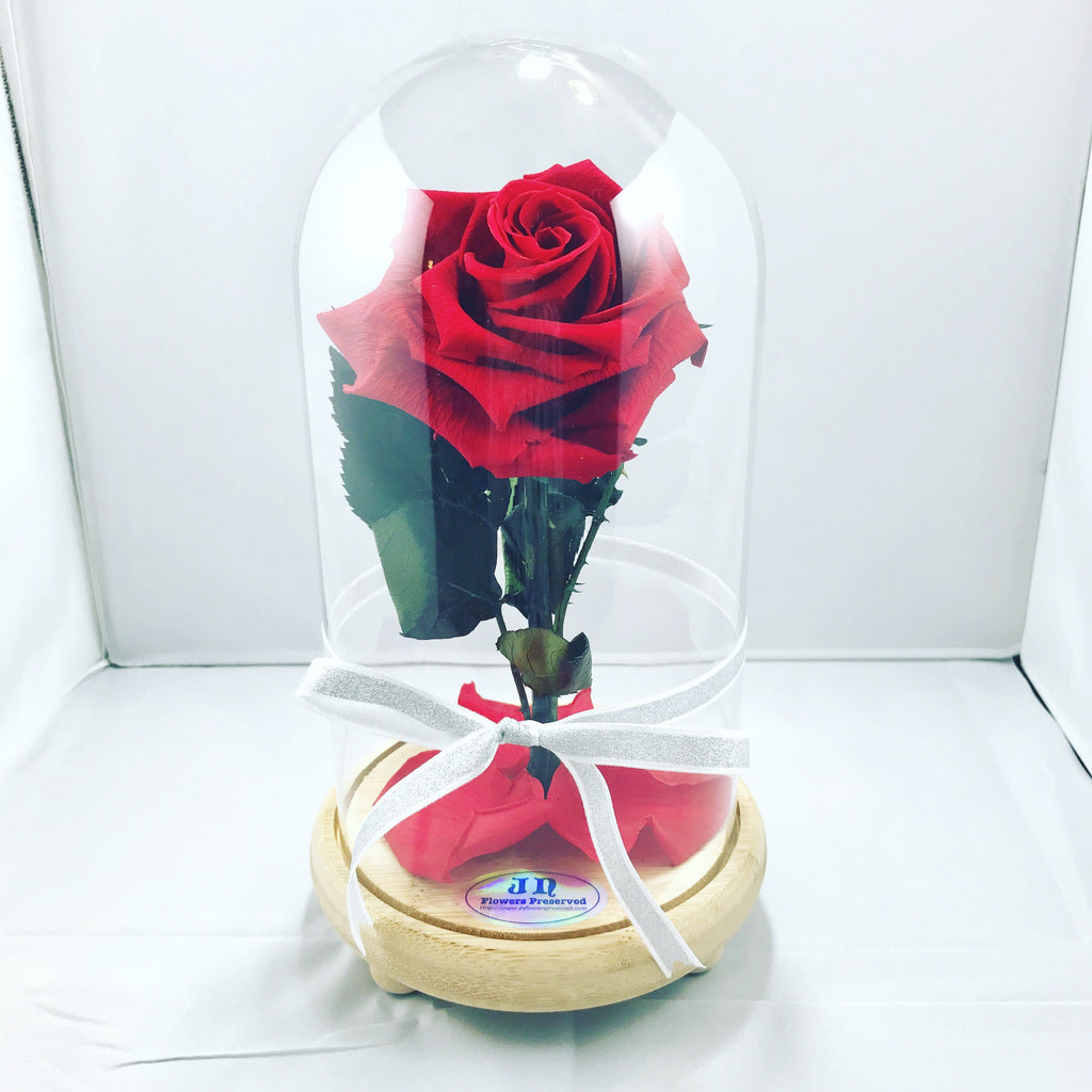 Xl beauty and the beast jn flowers preserved xl beauty and the beast izmirmasajfo Choice Image