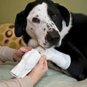 PawFlex Basic and Joint Dog Bandage Covers
