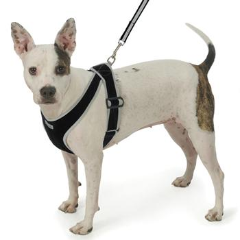 Precision-Fit Nylon Dog Harness - Black