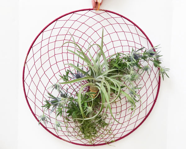 air plant and preserved eryngium in dream catcher