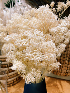 Preserved Baby's Breath
