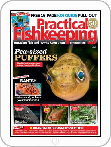 Practical Fishkeeping Subscription - 1 year/12 issues