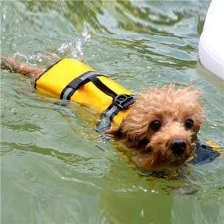 Adjustable Dog Life Jacket -  - justpugstuff.com