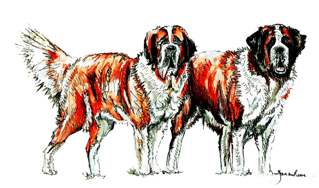 JanaRoos-illustration-dogs-Sint-Bernard