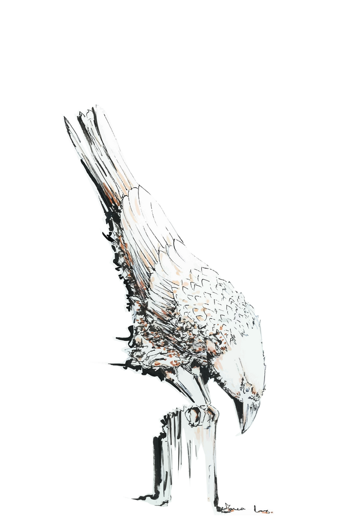 JanaRoos-illustrations-printdesign-birds-white-raven