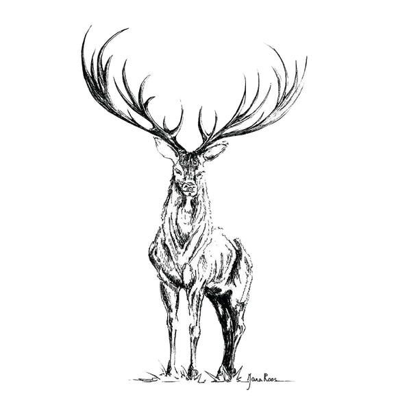 JanaRoos-Illustrations-Black&White-Deer-reindeer