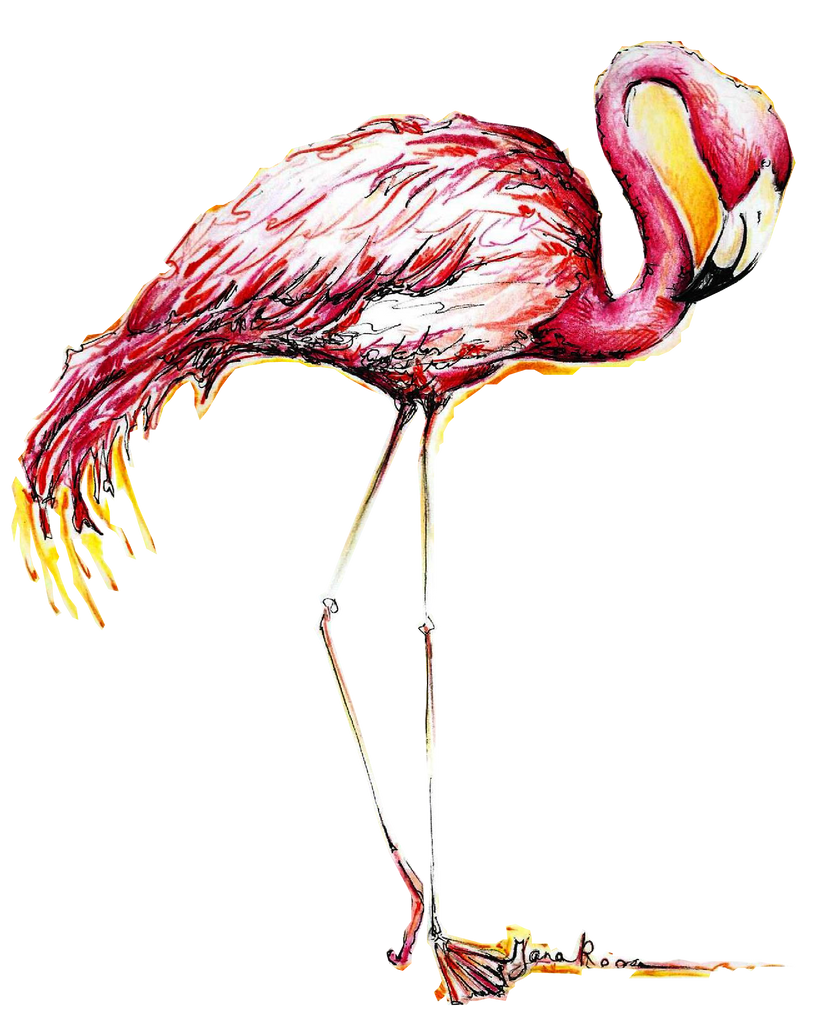 JanaRoos-illustrations-printdesign-birds-flamingo
