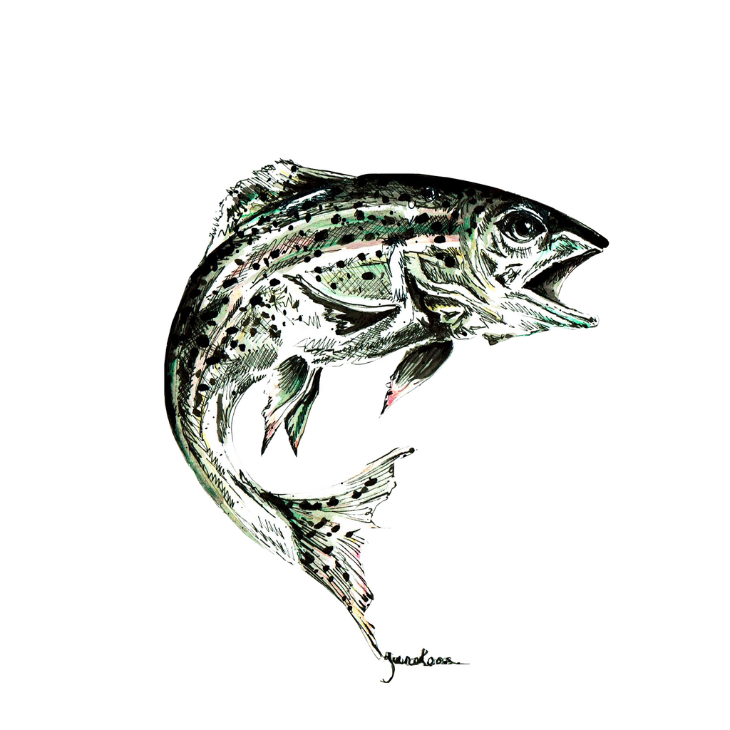 JanaRoos-illustration-sea life-trout
